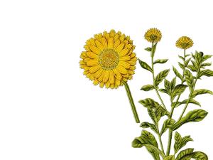 cura delle mani - Flower Tales cosmetica naturale fai da te