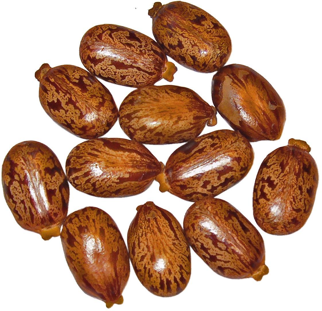 semi ricino cosmetica