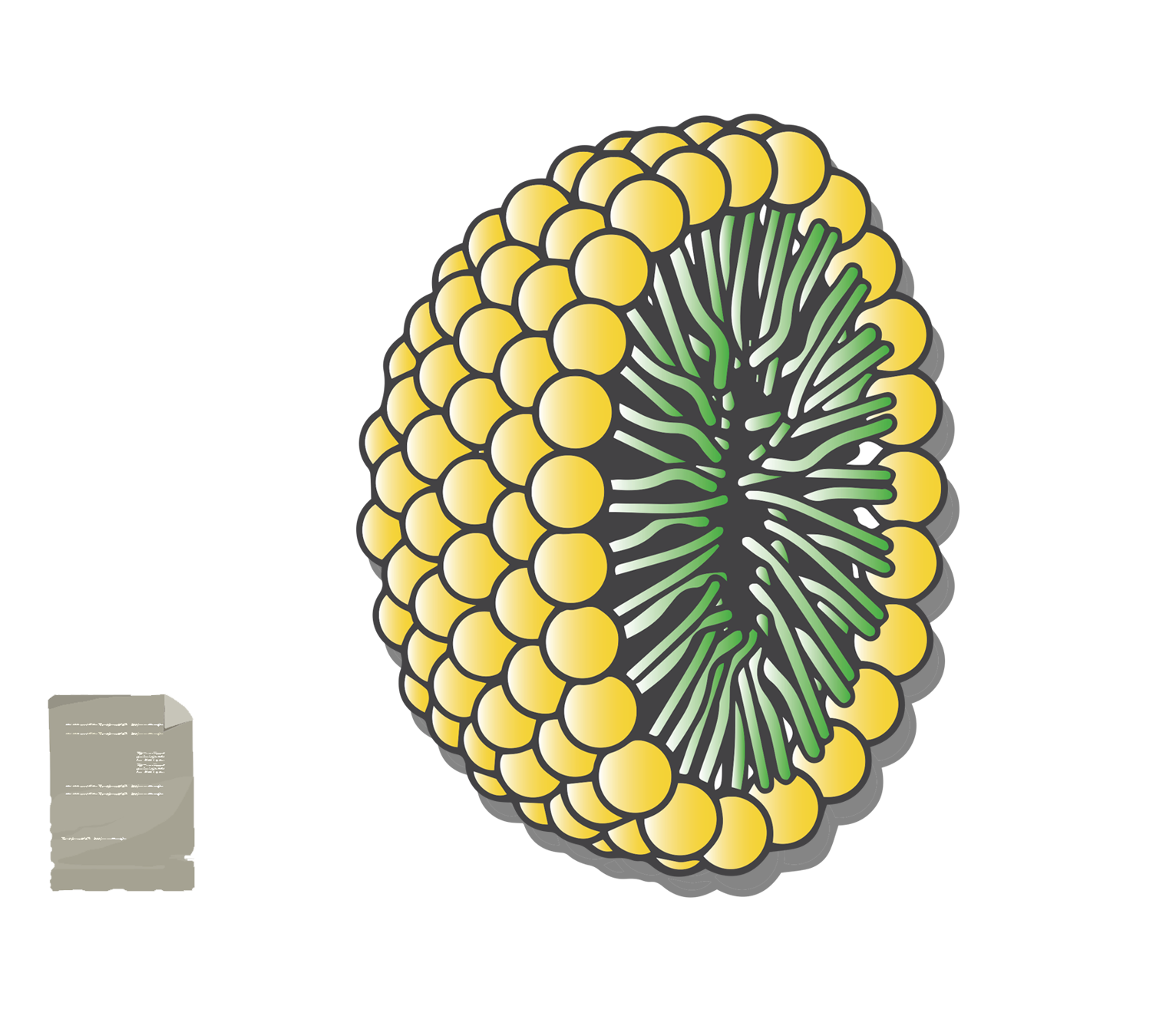micella Tensioattivo