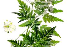 Cerfoglio - cosmetica naturale