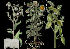 Flower Tales - cosmetica naturale fai da te