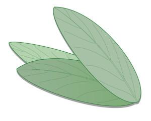 ricetta tonico viso pelli impure e grasse - Flower Tales cosmetica naturale fai da te