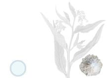 allantoina - Flower Tales cosmetica naturale fai da te