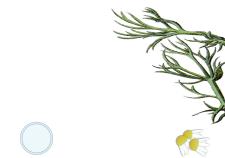 Bisabololo - Flower Tales cosmetica naturale fai da te