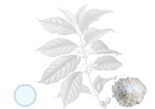 Caffeina - Flower Tales cosmetica naturale fai da te
