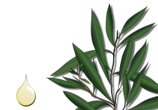 Tea Tree oil - Flower Tales: cosmetica naturale fai da te