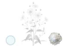 nulina - attivo cosmetico idratante - Flower Tales cosmetica naturale fai da te