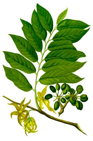 Olio essenziale di Ylang ylang - Flower Tales cosmetica naturale fai da te