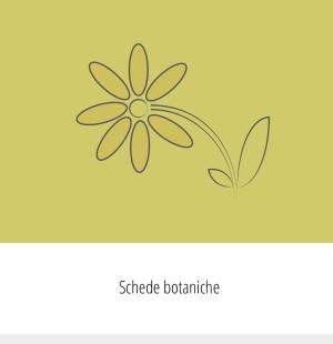 Flower Tales - schede botaniche