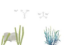 bicarbonato di sodio in soda - Flower Tales: cosmetica naturale fai da te
