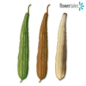 cos'è e come si usa la spugna vegetale di Luffa - guida e acquisto - rimedi naturali fai da te