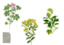 estratti vegetali glicolici glicerici alcolici - Flower Tales cosmetica naturale fai da te