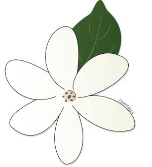 Tiaré - Gardenia Taithensis - Flower Tales cosmetica naturale fai da te