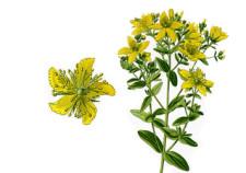Iperico - Hypericum perforatum - Flower Tales cosmetica naturale fai da te