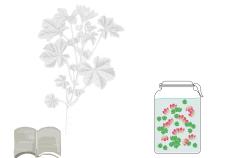 come fare un estratto glicerico - flower tales cosmetica naturale fai da te