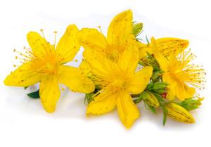 iperico - Flower Tales - cosmetica naturale fai da te