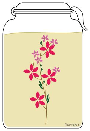 guida come fare un oleolito o olio macerato - Flower Tales cosmetica naturale fai da te