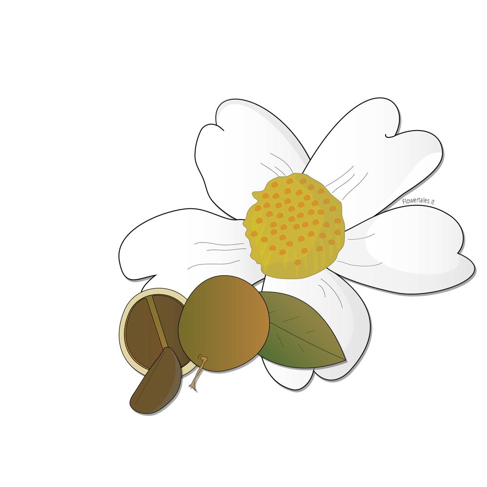 Olio di camelia puro - Flower Tales: cosmetica naturale fai da te
