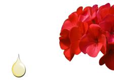 Olio essenziale di geranio - Flower Tales cosmetica naturale fai da te