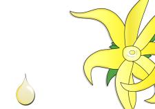 Olio essenziale Ylang Ylang - Flower Tales cosmetica naturale fai da te