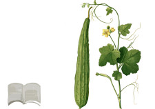 spugna vegetale di Luffa fai da te - rimedi naturali Flower Tales